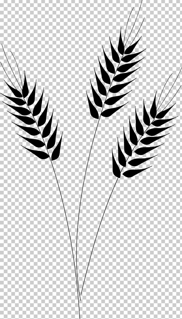 Wheat clipart branch. Desktop png black and