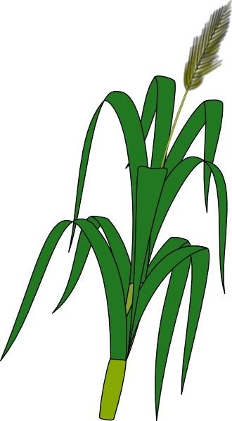 Fern clipart wheat plant. Food clip art free