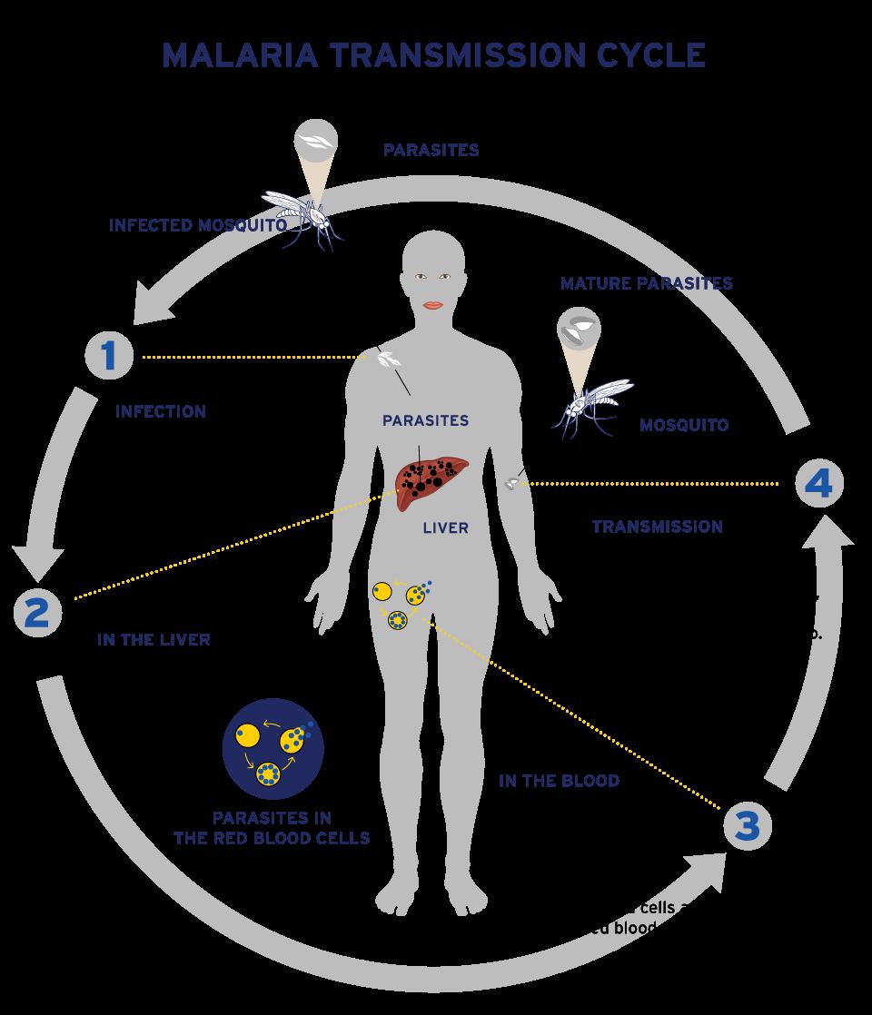 Reaching the last mile. Fever clipart malaria symptom