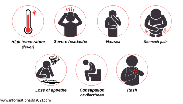 What does it feel. Fever clipart typhoid