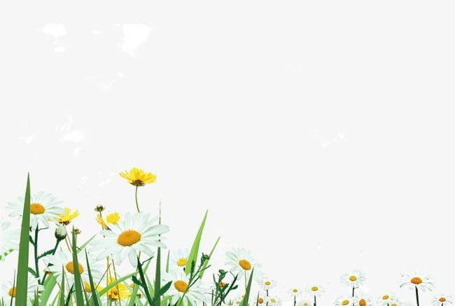 Wild flowers grass png. Field clipart field wildflower