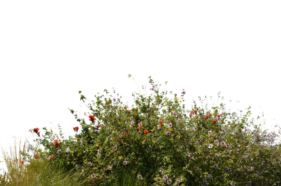 Png wildflowers transparent images. Field clipart field wildflower