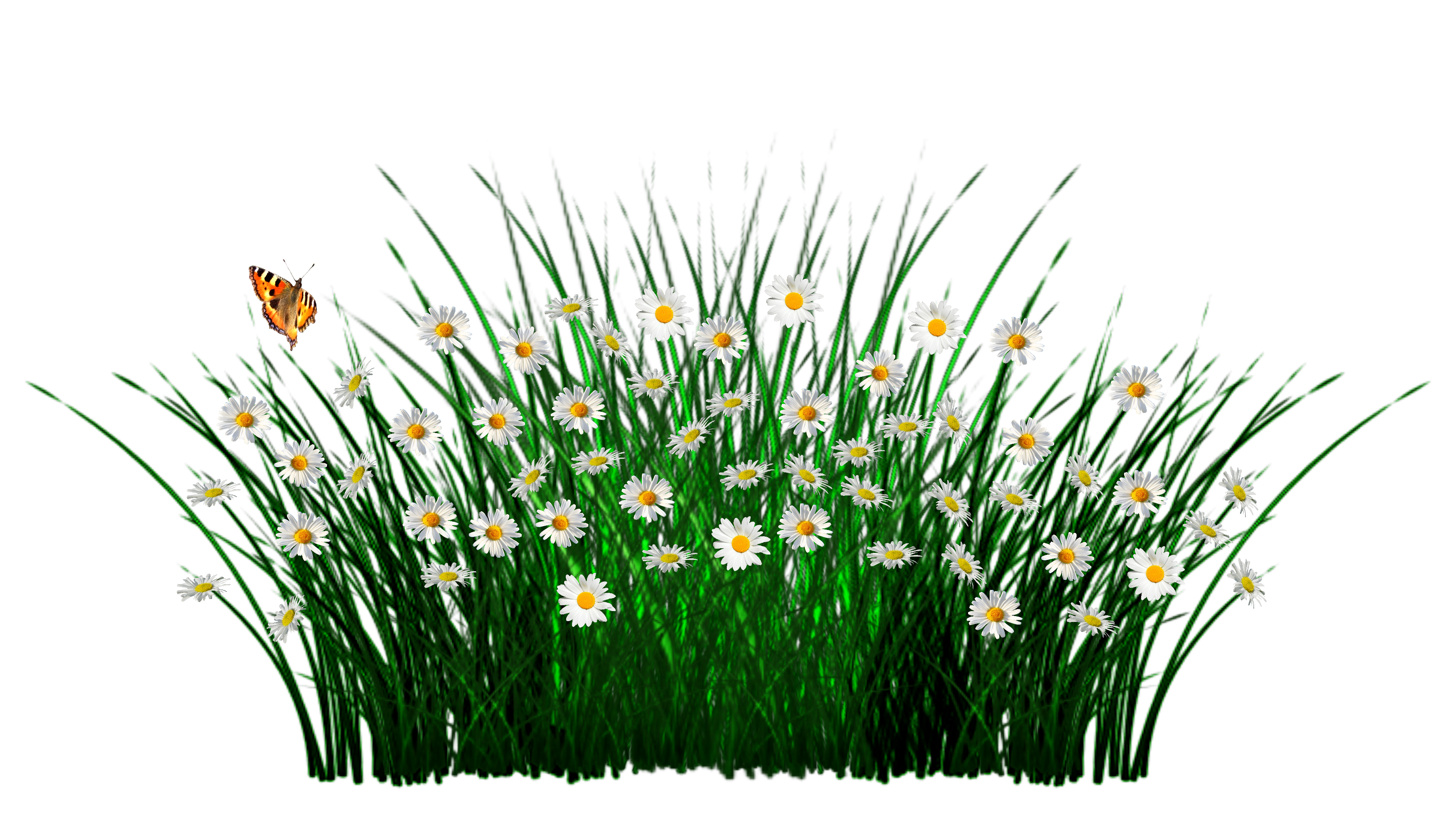Field clipart field wildflower. Gdynia clip art transprent