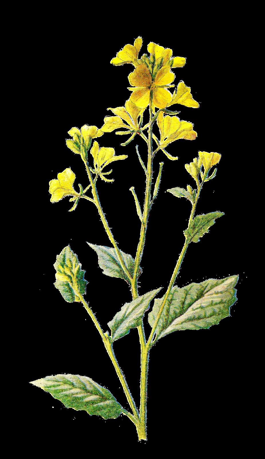 Field clipart field wildflower. Digital flower clip art