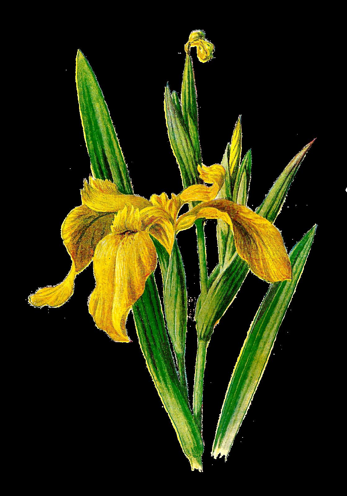 Printable clip art vintage. Field clipart field wildflower
