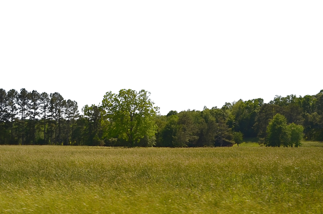 Png background images. Field transparent pluspng foresttree