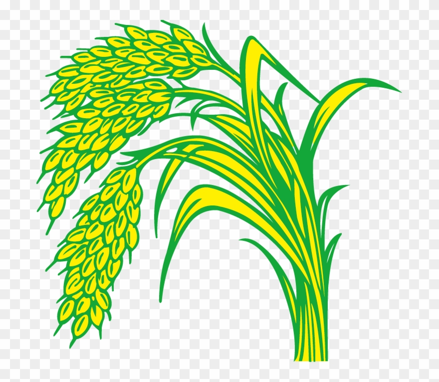 Paddy line png . Field clipart rice