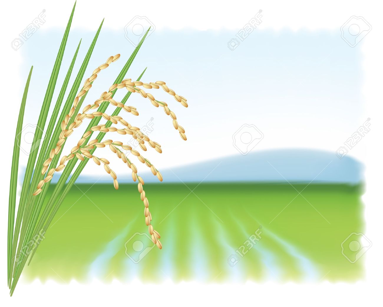 Field clipart rice. Station