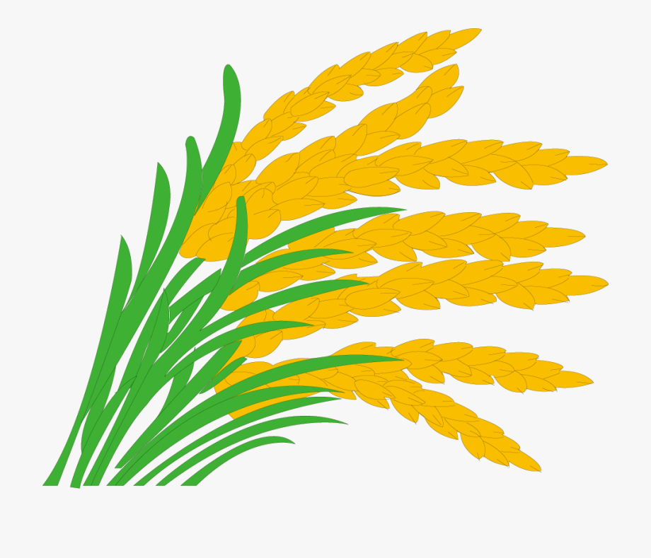 Paddy field grasses clip. Rice clipart rice cultivation