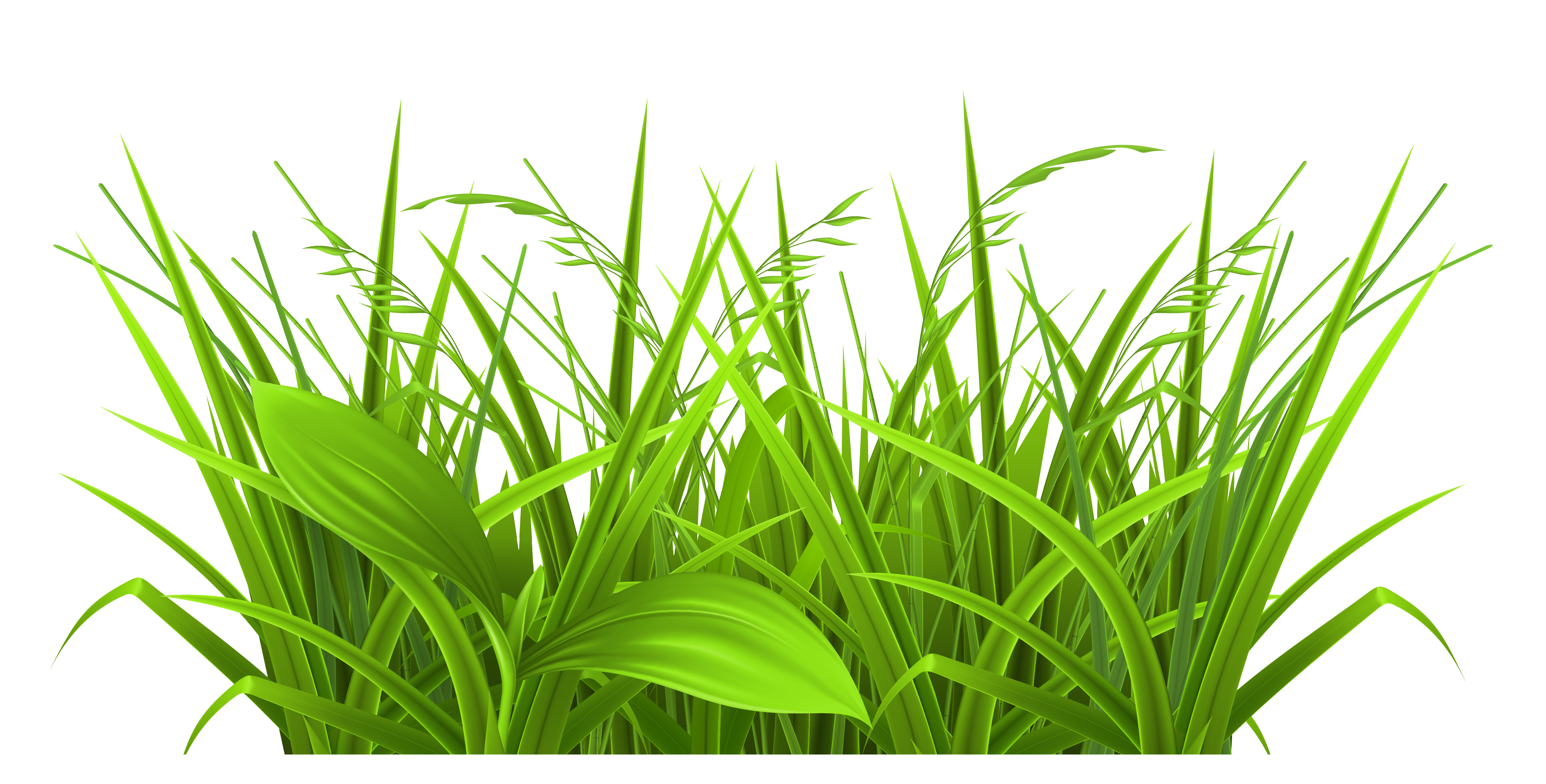 collection of grass. Wheat clipart green
