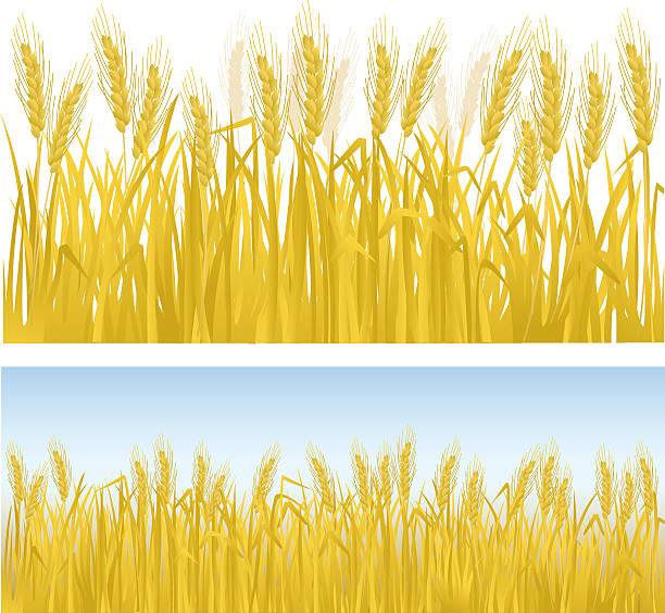 Grain Fields Stock Illustrations – 423 Grain Fields Stock Illustrations,  Vectors & Clipart - Dreamstime