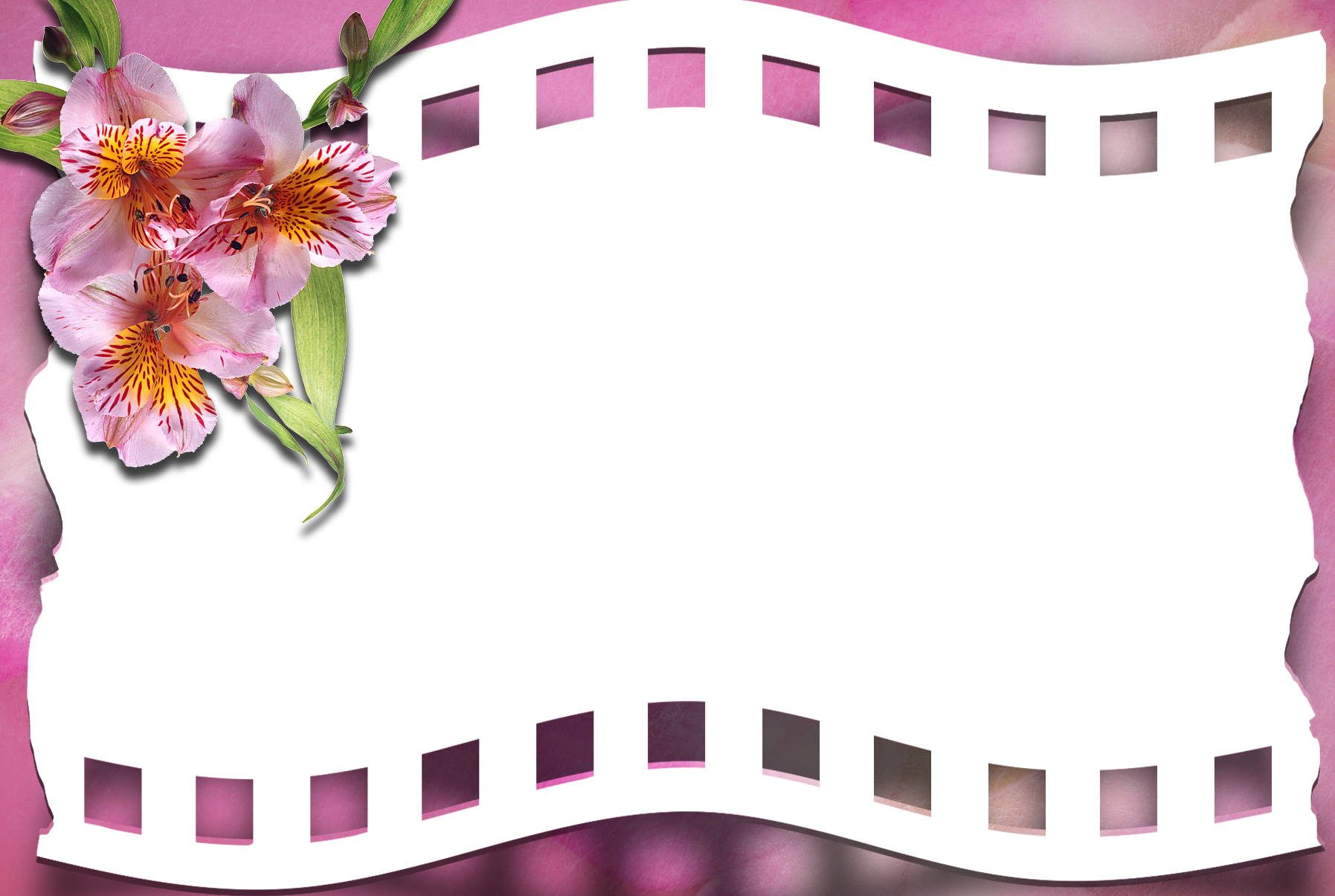 Film clipart pink. Transparent frame with flower