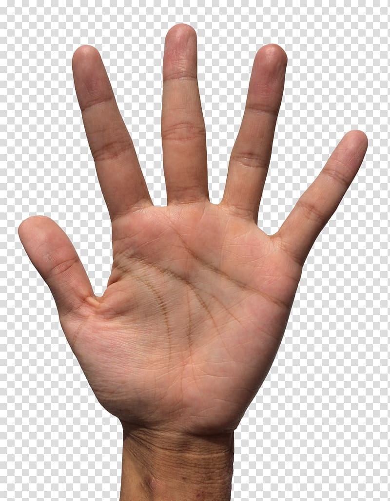 Human right palm body. Finger clipart pair hand