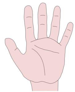 Fingers clipart sense touch. Free cliparts download clip