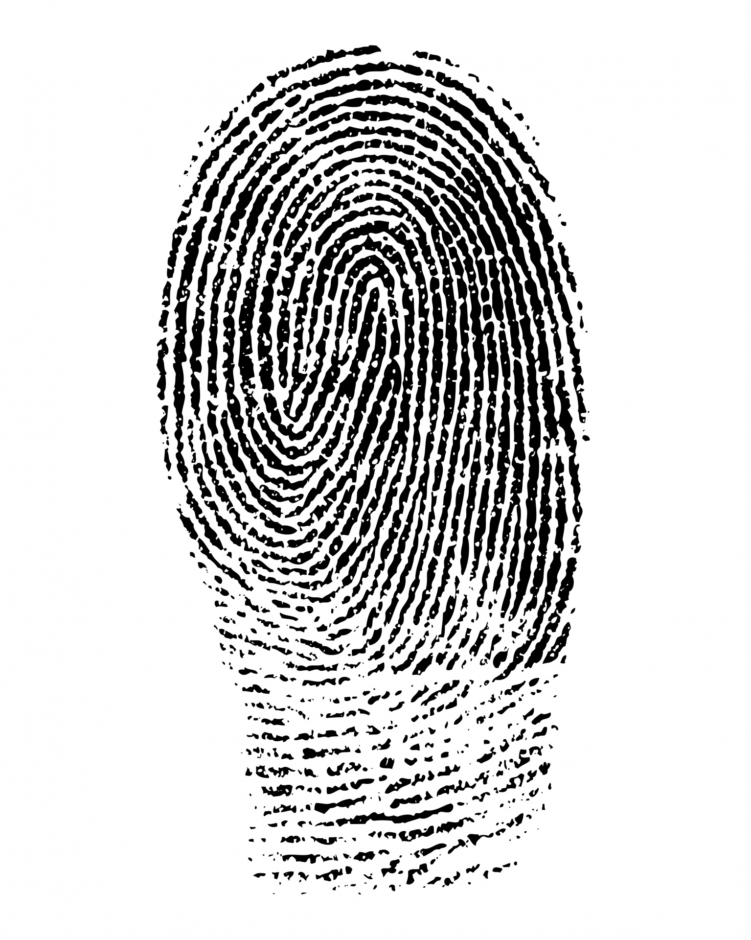 Free stock photo public. Fingerprint clipart
