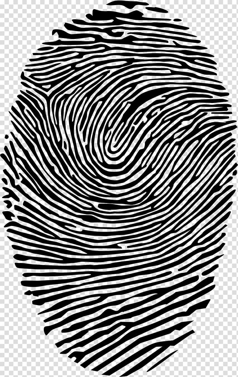 Spiral finger print transparent. Fingerprint clipart artistic