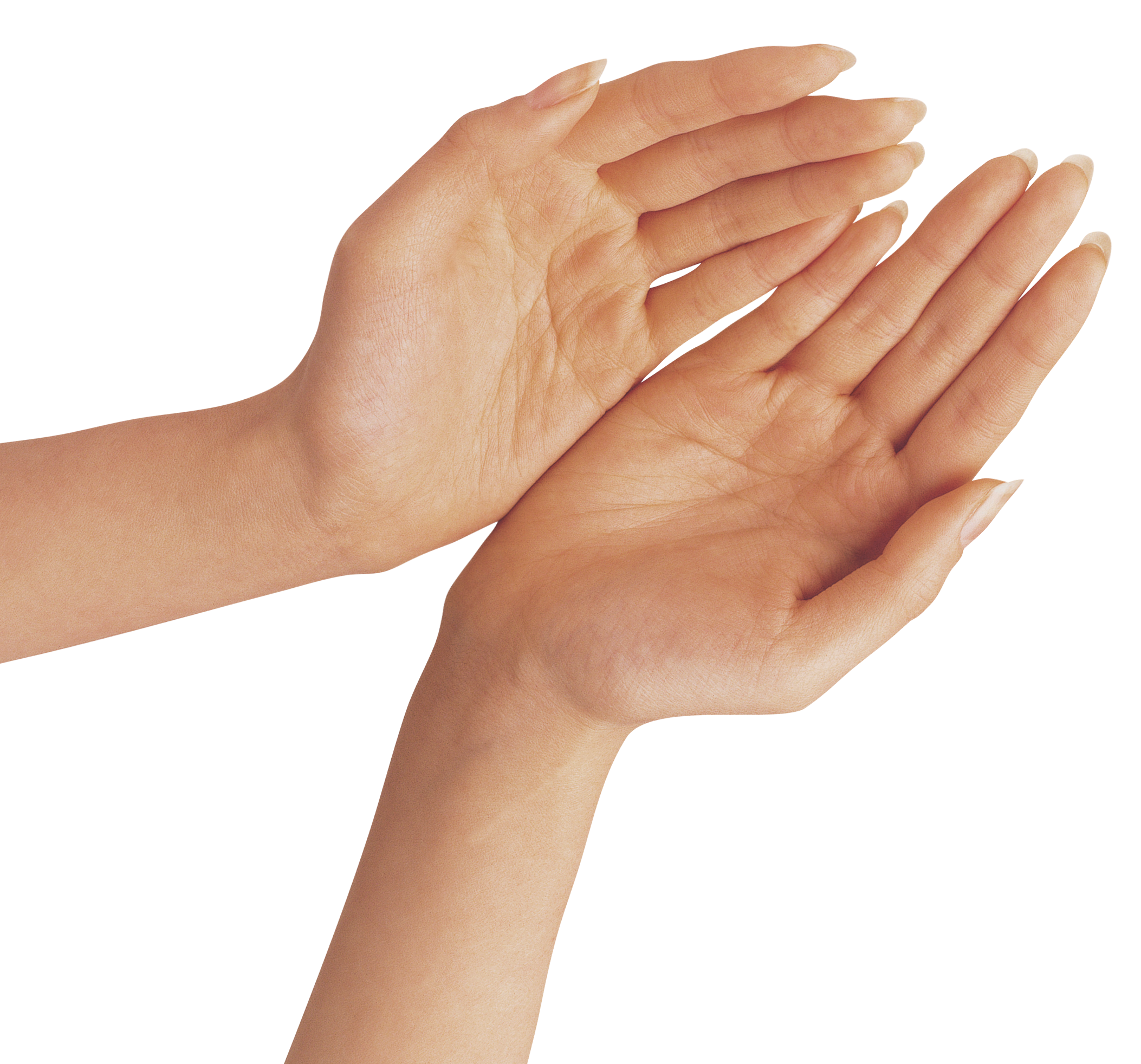 Two hands png image. Hand clipart transparent background