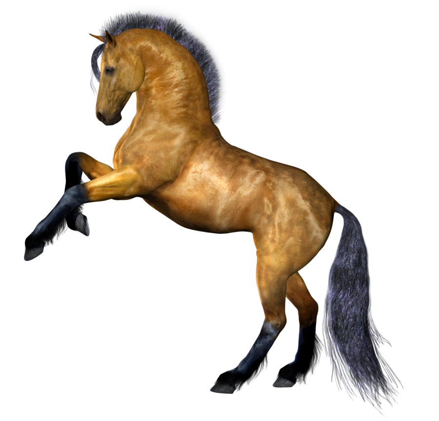 Fourteen isolated stock photo. Fire clipart horse