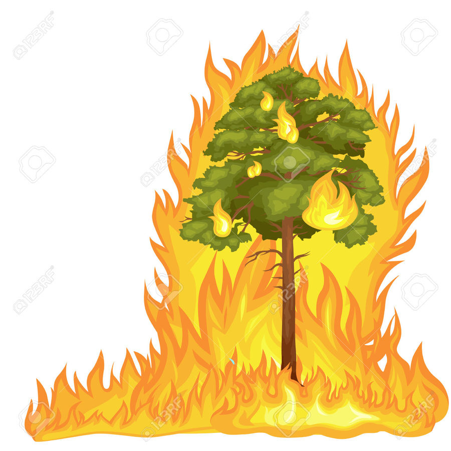 Fire Clipart Tree Fire Tree Transparent Free For Download On Webstockreview 2021 So now's a good time to learn how to keep it from catching fire and burning your house down. fire clipart tree fire tree