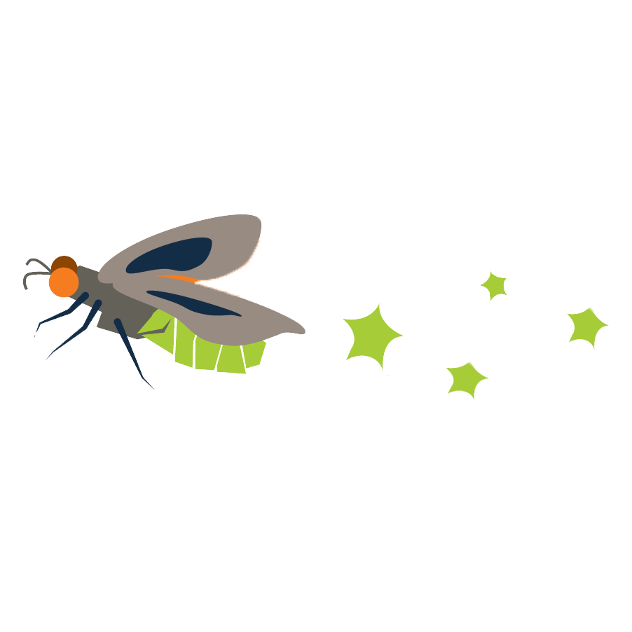 Firefly clipart fire fly. Our has a name