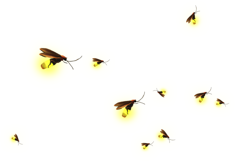 Clip art background material. Firefly clipart flying