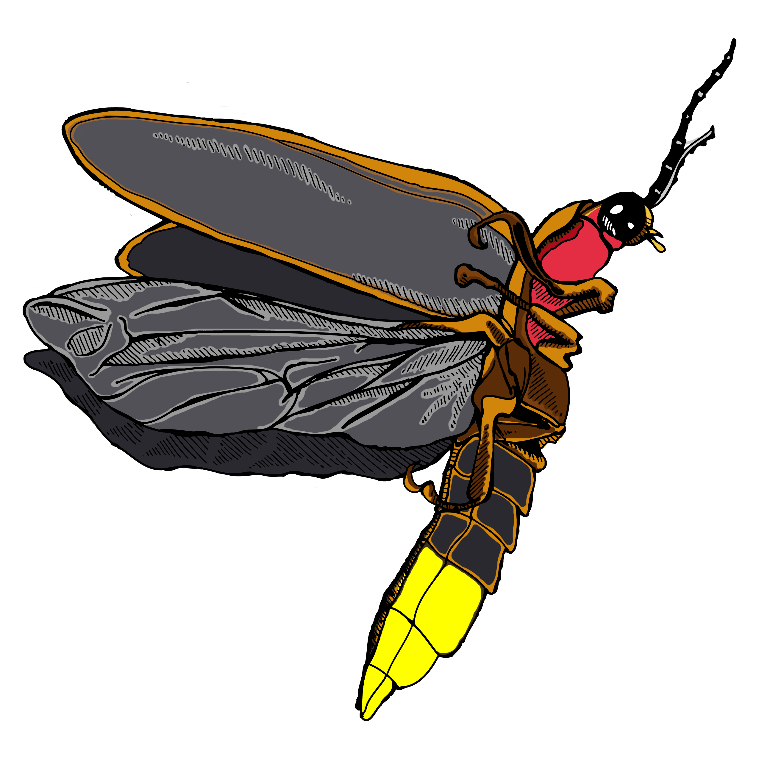 Firefly clipart jar sketch.  cool insect illustration