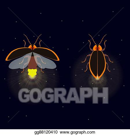 Vector stock with open. Firefly clipart night clipart