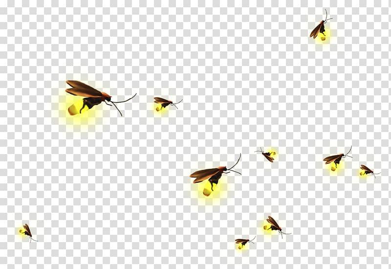 Fireflies material . Firefly clipart transparent background