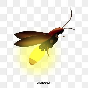 Firefly clipart transparent background. Png vector psd and