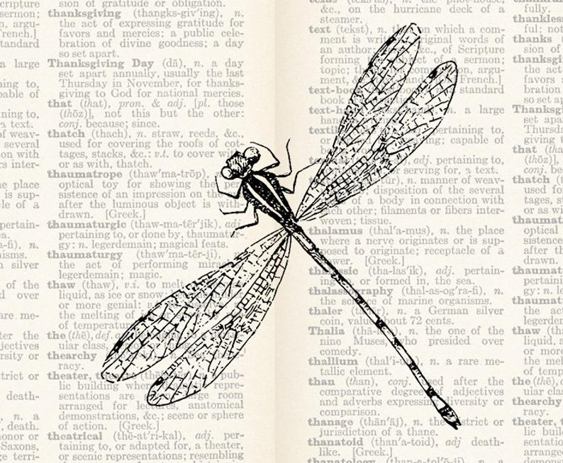 Firefly clipart vintage. Digital illustration insect bug