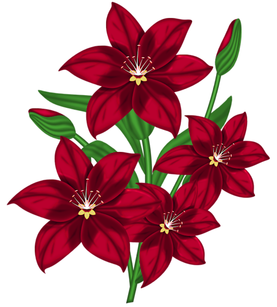 Nice red png poinsettia. Firewood clipart bunch