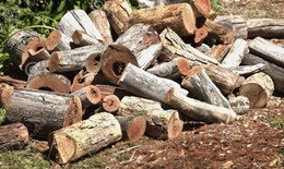 Firewood clipart wood pile. Download