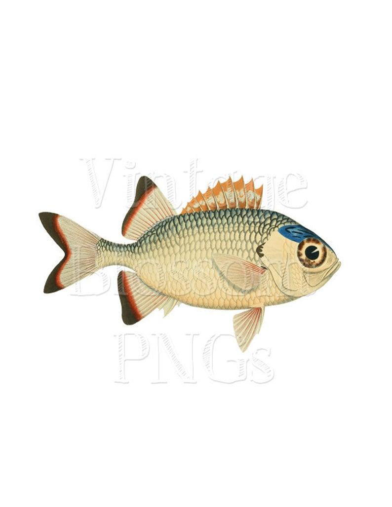 Fish clipart beige. Png jpg sea life