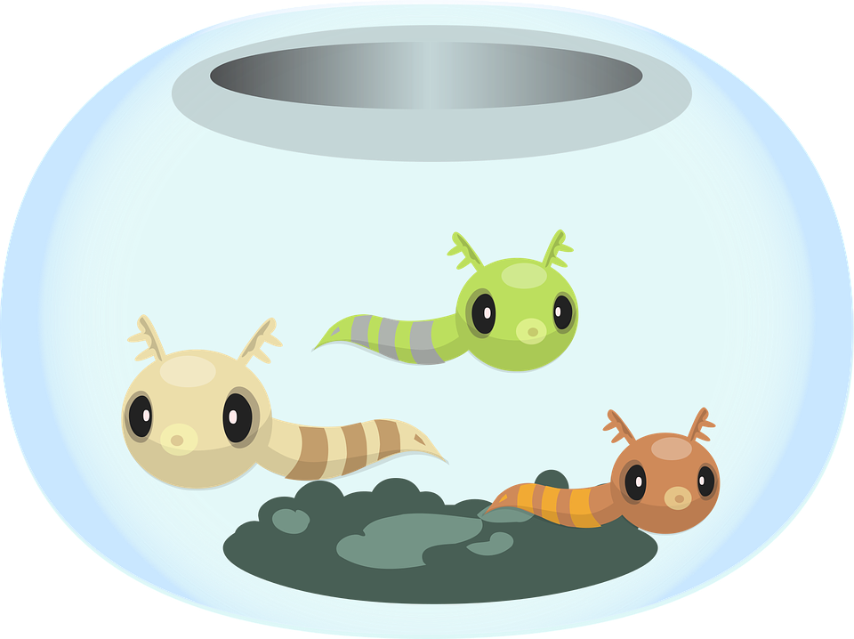 Fish clipart bowl. Picture of a shop