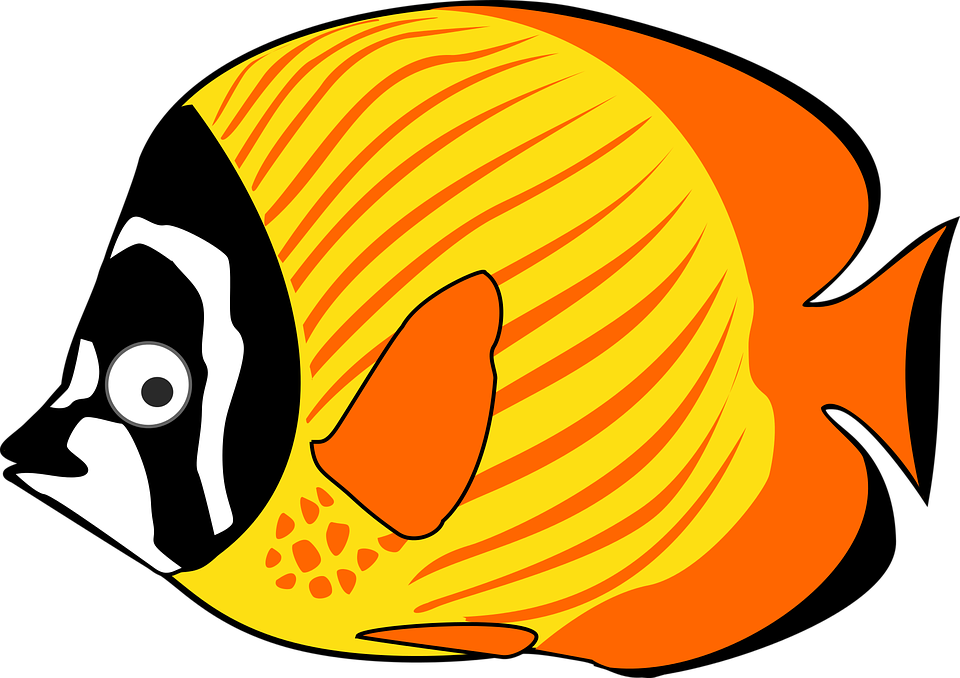 Exotic cliparts shop of. Fish clipart chip