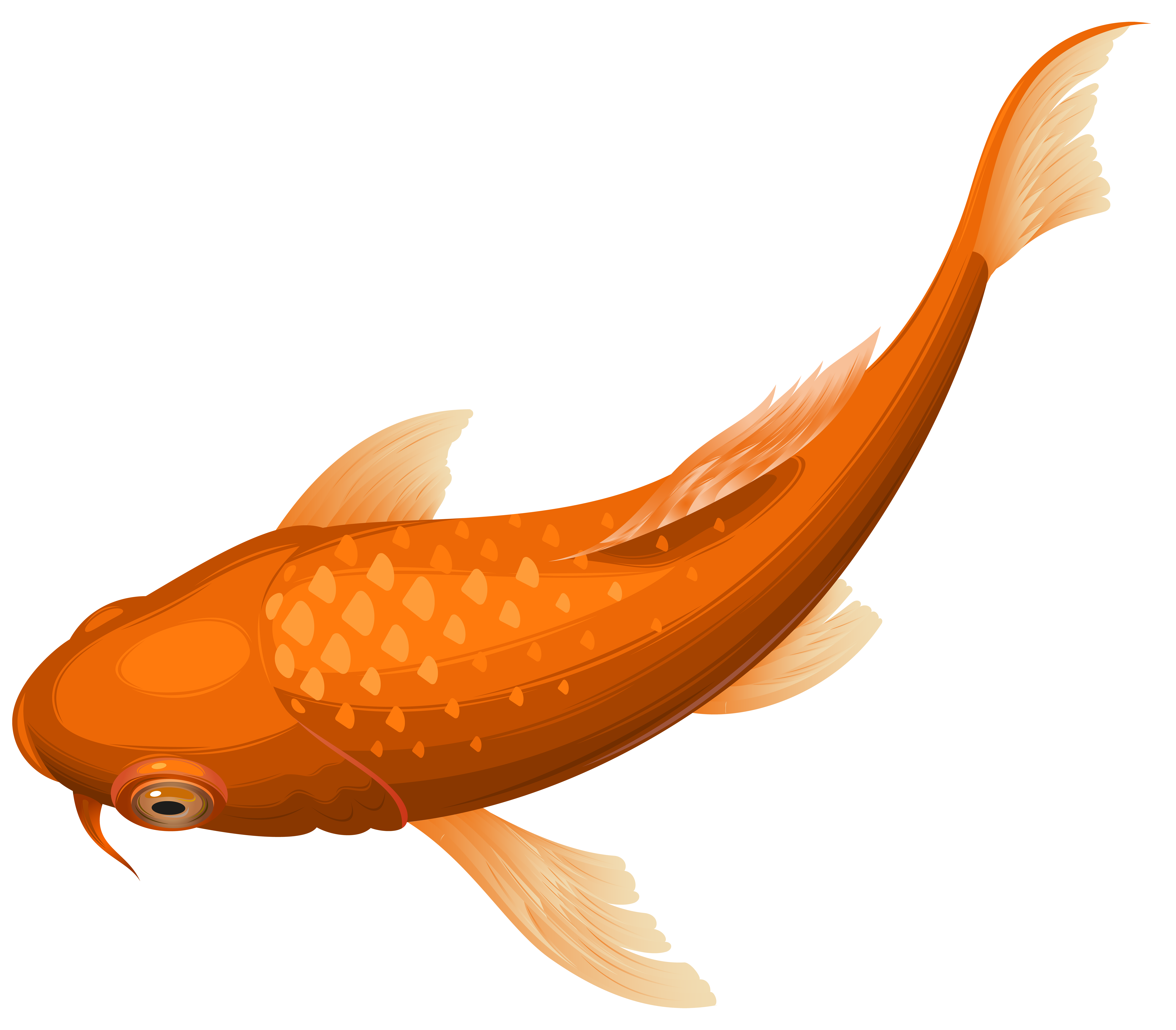collection of goldfish. Fishing clipart transparent background