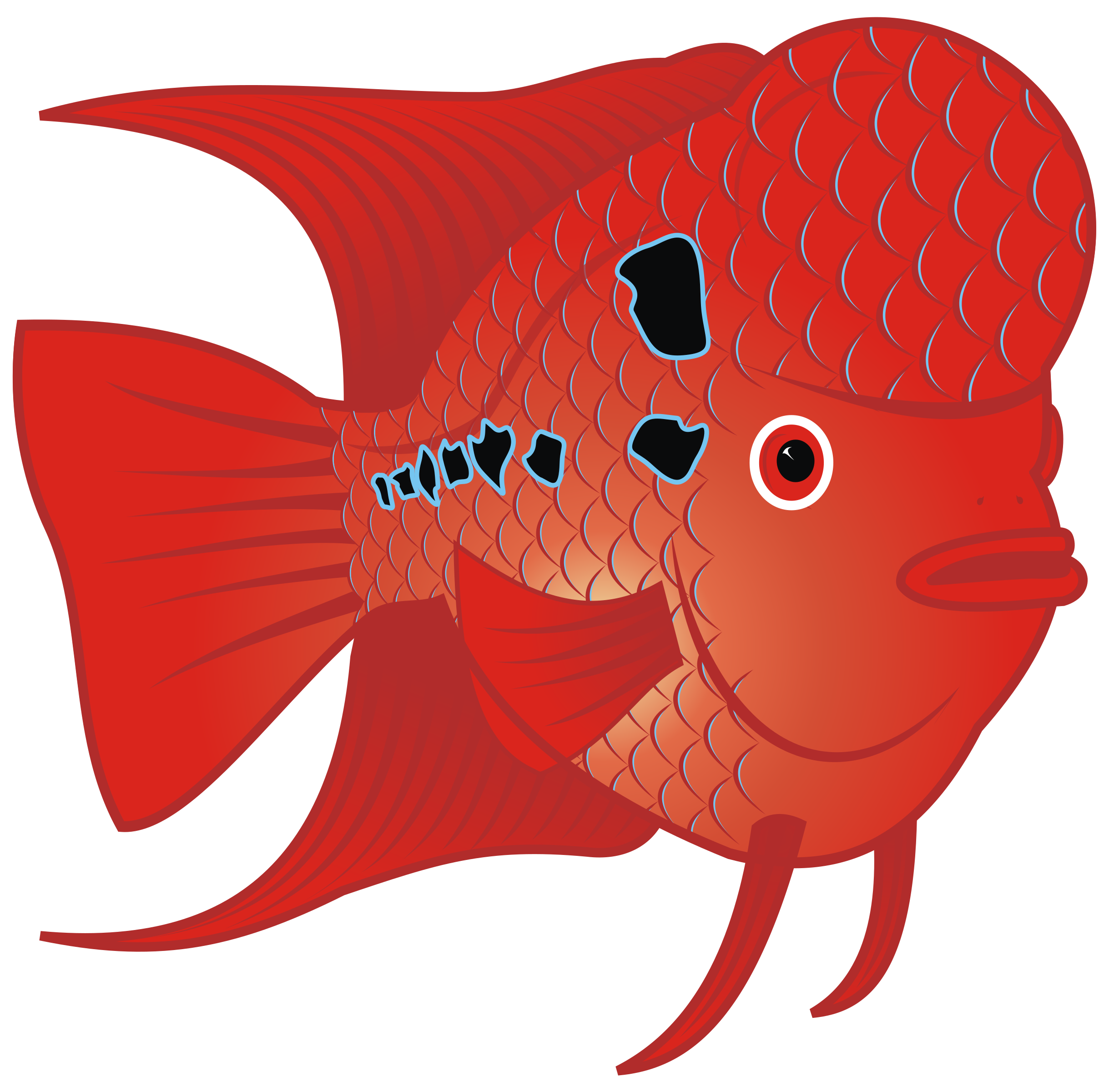Red icons png free. Fish clipart goldfish