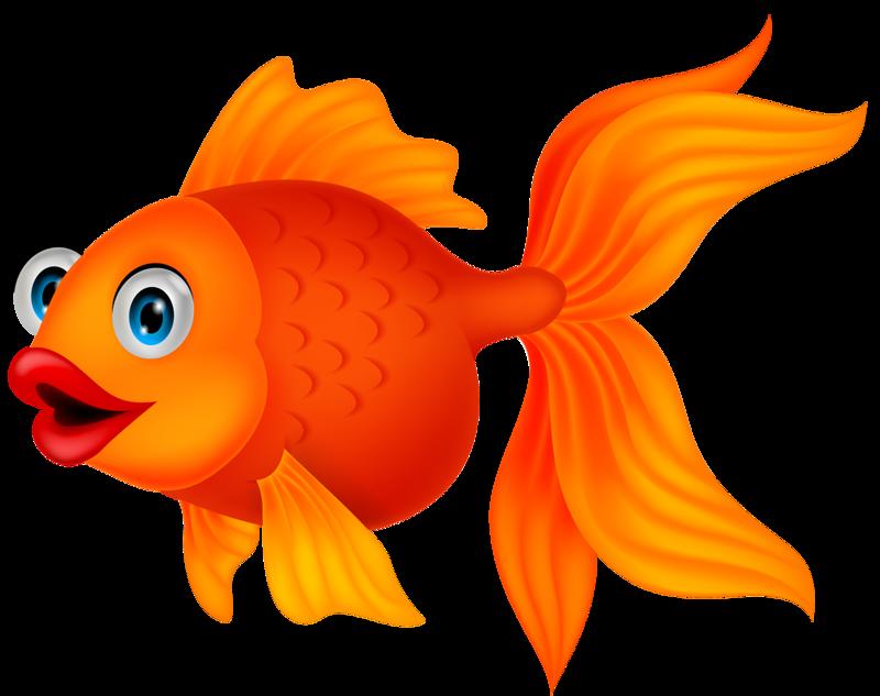Goldfish clipart golden fish.  png pinterest fe