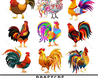 Etsy . Hen clipart colorful chicken