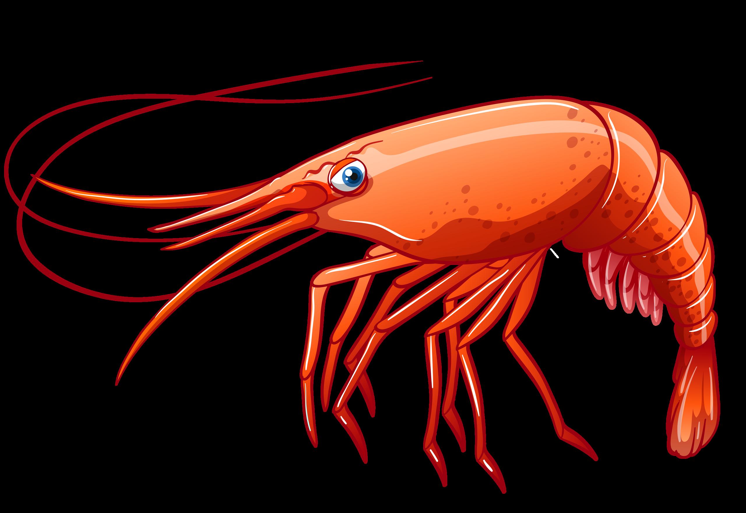 png clip art. Fish clipart shrimp