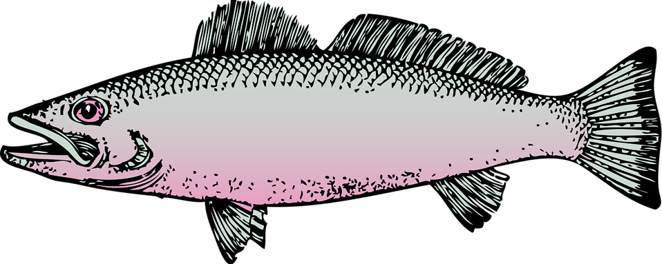 Free stock photo illustration. Lake clipart fish clipart