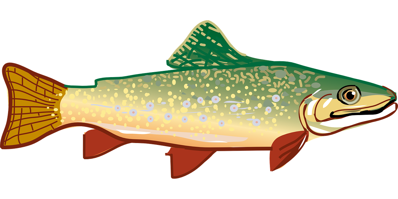 Fish clipart trout. The best drawings of