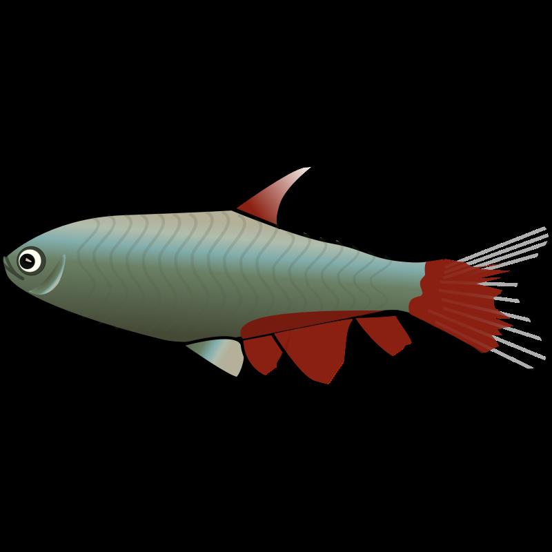 Aquarium clip art cliparts. Fish clipart trout