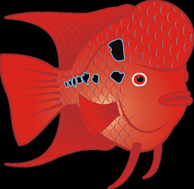 Goldfish free cartoon fish. Fishbowl clipart animated
