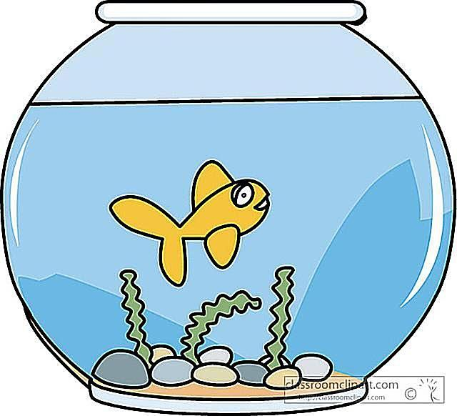 Free download best on. Fishbowl clipart fish swimming