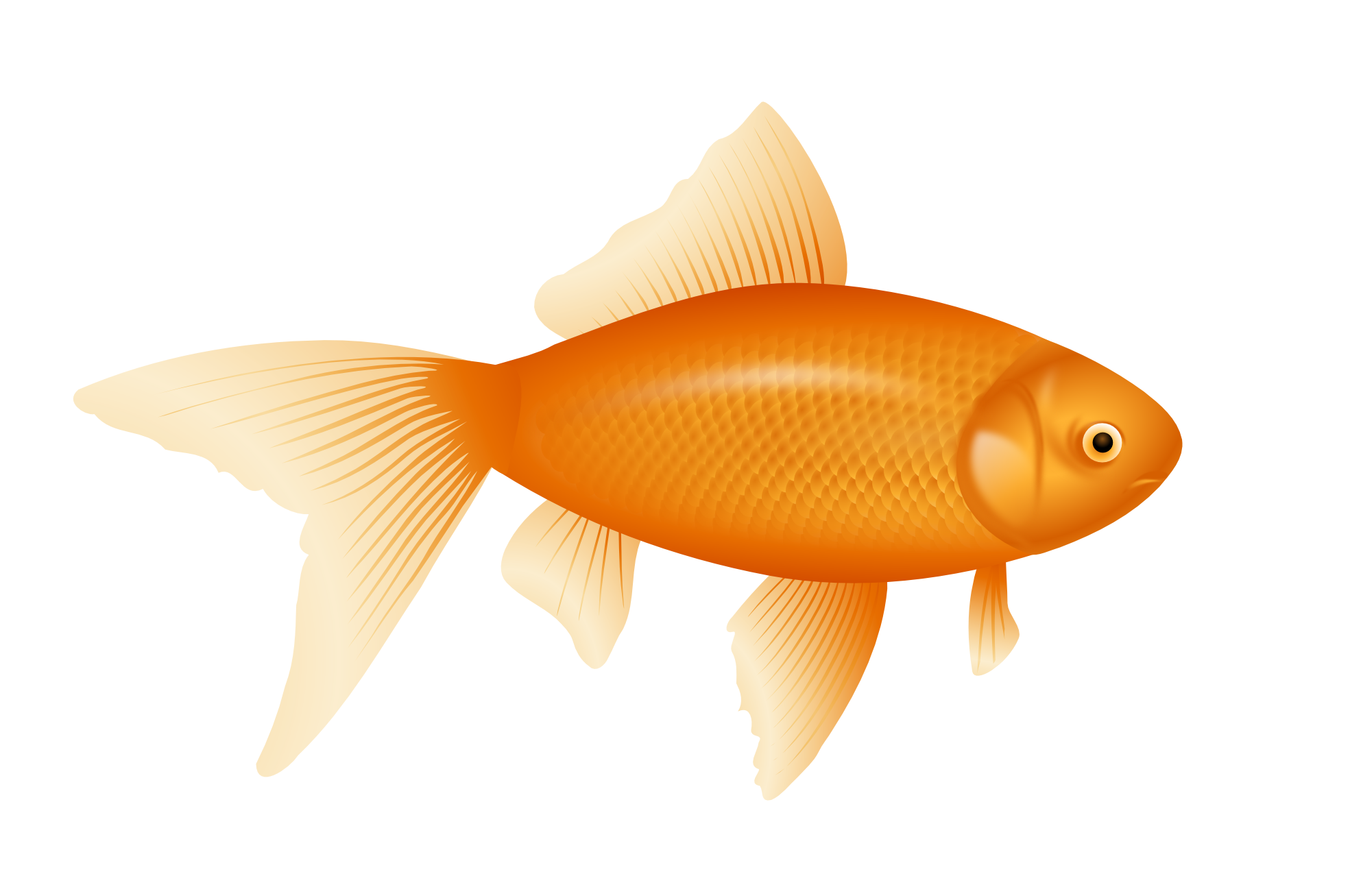 Sure fire images of. Goldfish clipart fish head
