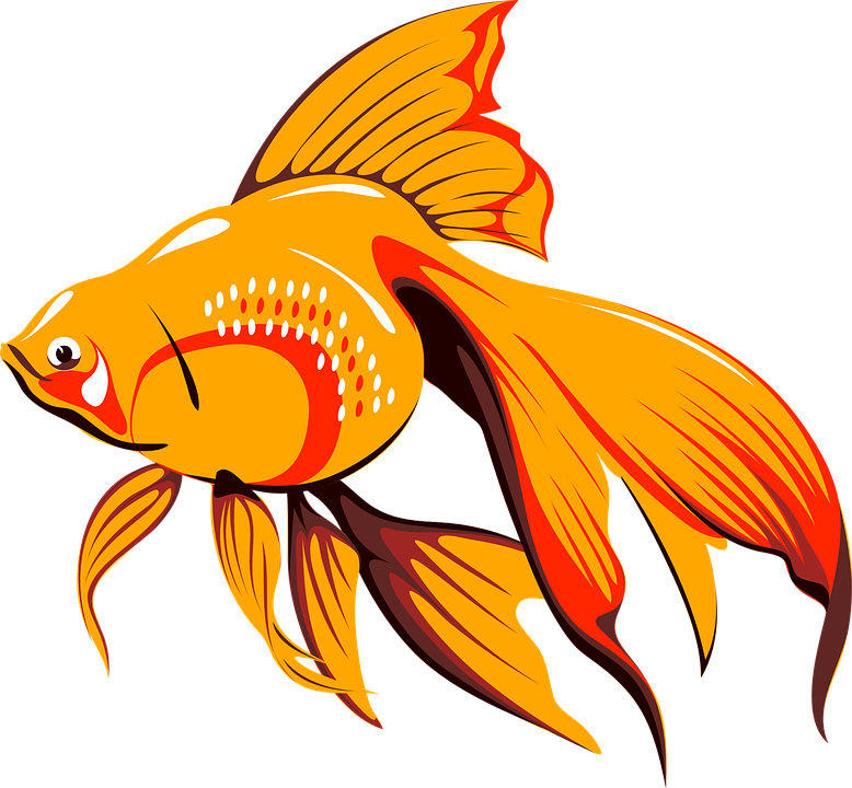Picture of a fish. Fishbowl clipart home