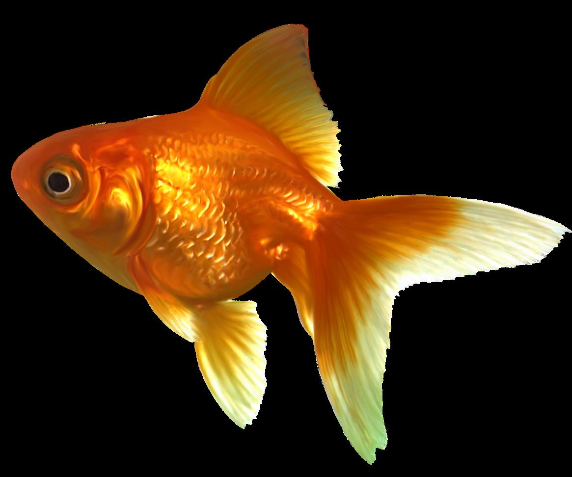 Goldfish sticker by carol. Fishbowl clipart pet fish