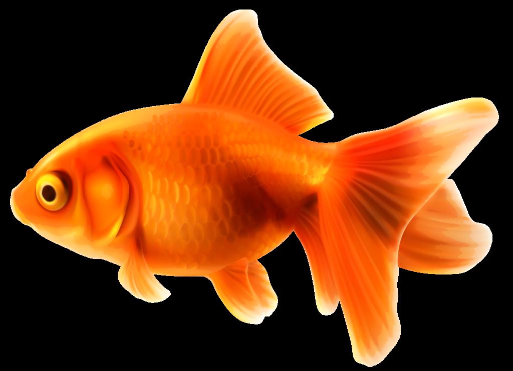 Fishbowl clipart turtle tank. Goldfish png balloon errortape