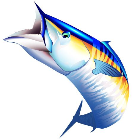 Fish saltwater illustrations . Fishing clipart sport fishing